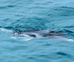 Maldive | 05b