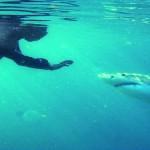 Conta il linguaggio corporeo, sia il proprio sia quello dello squalo. Diventa cruciale sentirsi calmi, farsi accettare e riconoscere segni di nervosismo nell'animale. Solo un'immensa esperienza può rendere sicuro il tutto