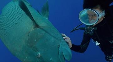 5 - pesce Napoleone