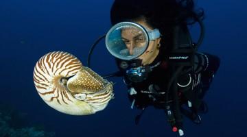 6 - Nautilus