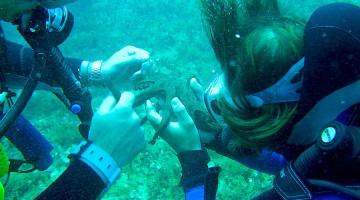In ASBI si fa uno studio dettagliato sulle possibilità di toccare, ossia osservare con le dita, tutti gli organismi viventi con cui è possibile farlo