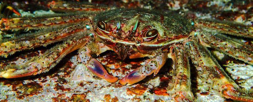 Specie aliene: una minaccia per la Biodiversità