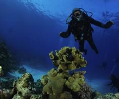 Vari momenti dell'immersione