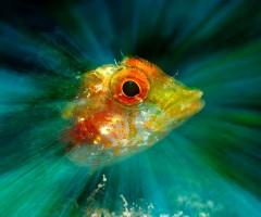 L'illuminazione del flash sulla sola testa del peperoncino evidenzia gli sgargianti colori di cui è composto, mentre sullo sfondo il verde e l'azzurro mescolati tra loro sembrano essere l'effetto di un dipinto