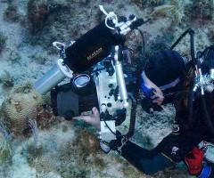 Shooting - alberelli di Natale: il fotografo mentre ritrae gli alberi di natale sul corallo duro