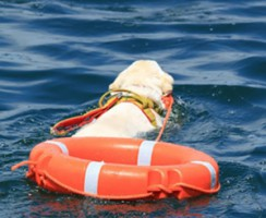 Dimostrazione di Salvamento con cani da salvataggio 2014