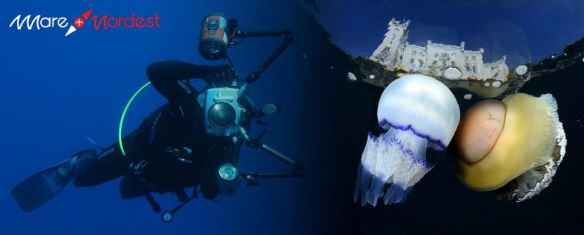 International Underwater Photo Contest Trieste