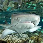 Sharks Category Tobias Bernhard Raff - Germany