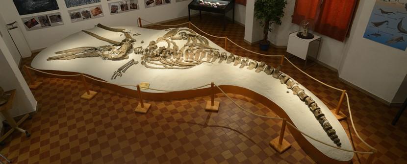 Mostra Mineralogica e Paleontologica G.A.M.P.S. Scandicci (FI)