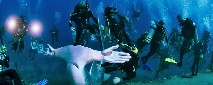 Silence of the sharks