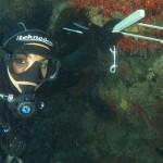 Il Project Baseline Corallium rubrum