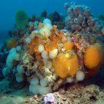 Ambiente - Tegnua... non siamo ai tropici, bensì in alto Adriatico. Ma è comunque un inno alla biodiversità