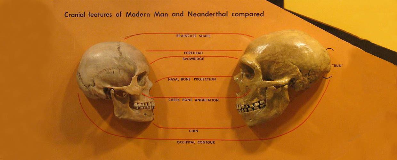 L'immersione dei Neanderthal