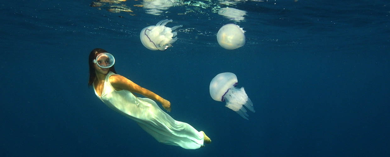 Come nascon le meduse