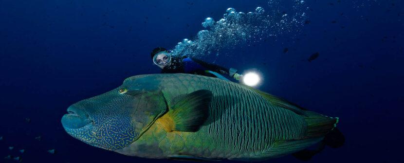 Modella subacquea, quale ruolo? (Underwater model, which role?)